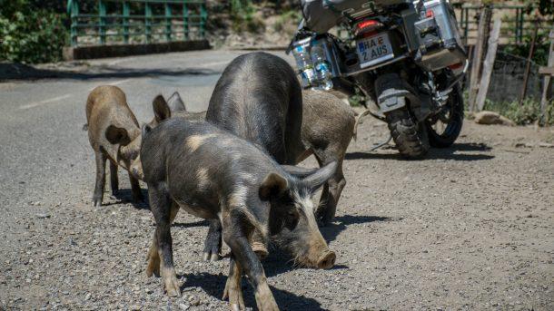 schweinemarsch